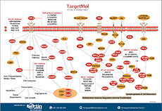 Immunology/Inflammation Poster TargetMol